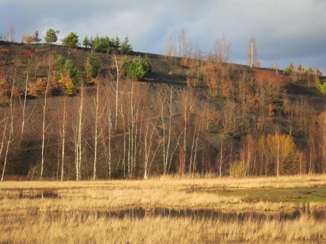 Bas pâturage Terril des argales, Rieulay (59, nord)
