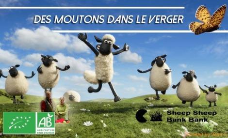 large_Des_moutons_dans_le_verger-1457438465-1457438495