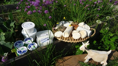 Fromages au potager